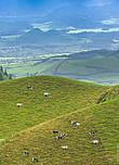 Удивительно красивые пейзажи. Холмы — это мелкие вулканы. Мы предположили, в шутку, что коровы на Азорских островах специальной модификации — с одной стороны у них ноги короче, что позволяет им с удобством пастись на склонах. Кстати, интересный факт, благодаря тому, что среднегодовая температура на островах около 21-22 градусов — здесь нет такого понятия как