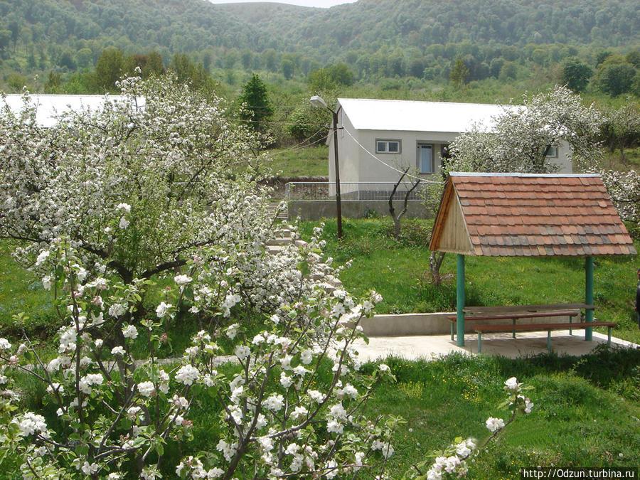 Цветут яблони...красота неописуемая..