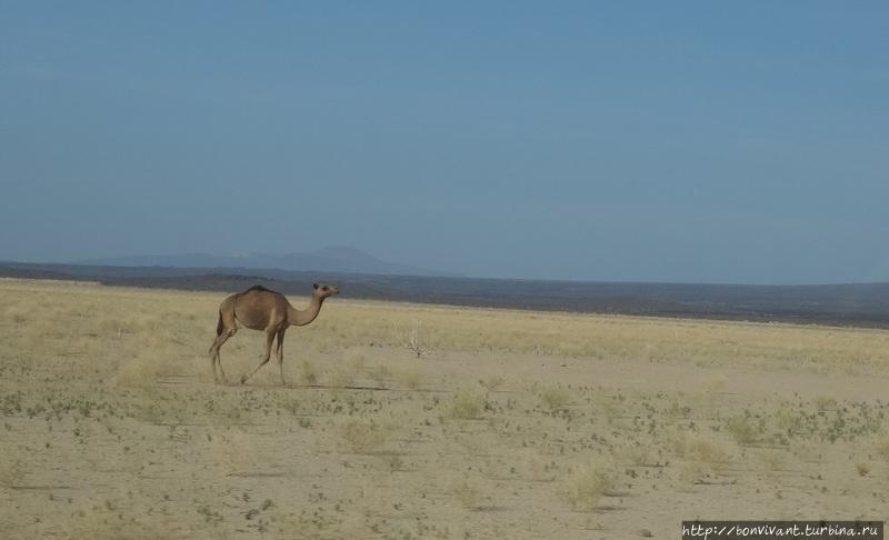 Пустыня не безжизненна