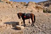 Ну а для самых ленивых, местные лошадки — отличный выход из ситуации.