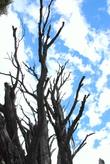 Деревья, высохшие от ветра, холода и недостатка влаги — типичный пейзаж многих мест Патагонии