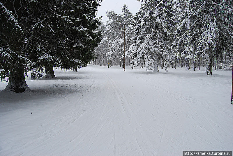 Лыжня ничем не отличается от нашей)