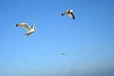 Абер-Врак, птицы над абером.