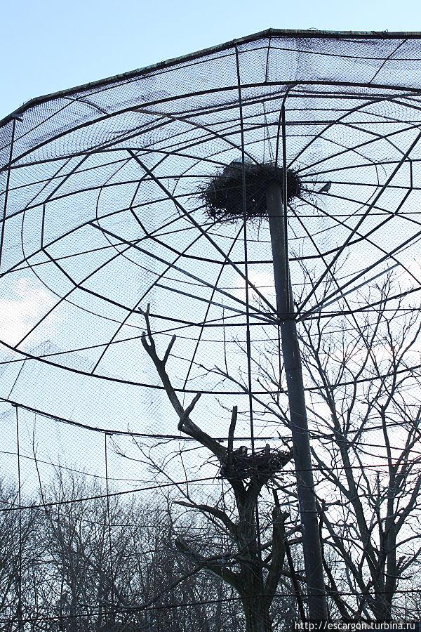 Вольер с белоплечими орланами, на котором поселилась пара белых аистов