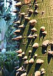 Представлена разная фактура деревьев.