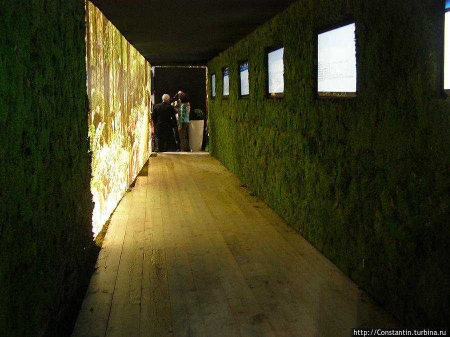Зеленый коридор.