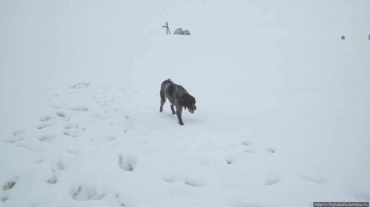 Собака после теплого Сред