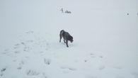 Собака после теплого Средиземного моря удивлена сугробами.