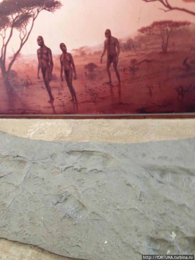 следы древних гоминидов