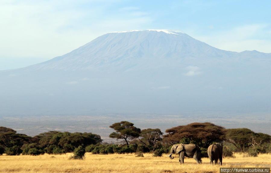 Слоны под Килиманджаро
