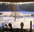 Все кругом покрылось снегом. Но жизнь под ним осталась — впали в спячку кроты, но видны змейки следов мышей и даже бобров.