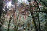 На  шестой   день   пути   мы    попали   в   обьятия   сказочного,   полного   волшебства   леса.