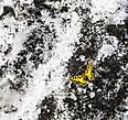 Бабочка на снегу на высоте примерно 2200 м. Как сюда долетела?