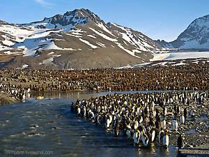 бог создал труд и обезьяну чтоб получился человек а вот пингвина он не трогал тот сразу вышел хорошо