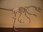 В домезозойском зале экспонаты относятся ко времени от образования Земли (4 500 миллионов лет назад) до конца палеозойской эры. Также описывается массовое пермское вымирание — исчезновение около 95 процентов фауны к концу Пермского периода.