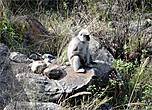 О, да здесь нас кто-то поджидает. Это — обезьяна лангур, спустившаяся к реке из леса. Кроме лангуров в лесах национального парка Лангтанг водятся желтолицые макаки, красная панда, кабаны, горные козы. А еще говорят, что здесь видели гималайского медведя.