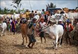 Кроме развлечения, это мероприятие имеет и практический смысл. Здесь собираются не только любопытные зрители, но и потенциальные покупатели быков. И демонстрируя силу и выносливость животных на забеге, крестьяне повышают их стоимость.