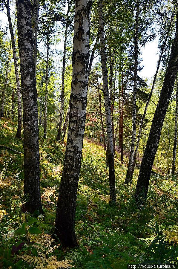 Лес в окрестностях ключа