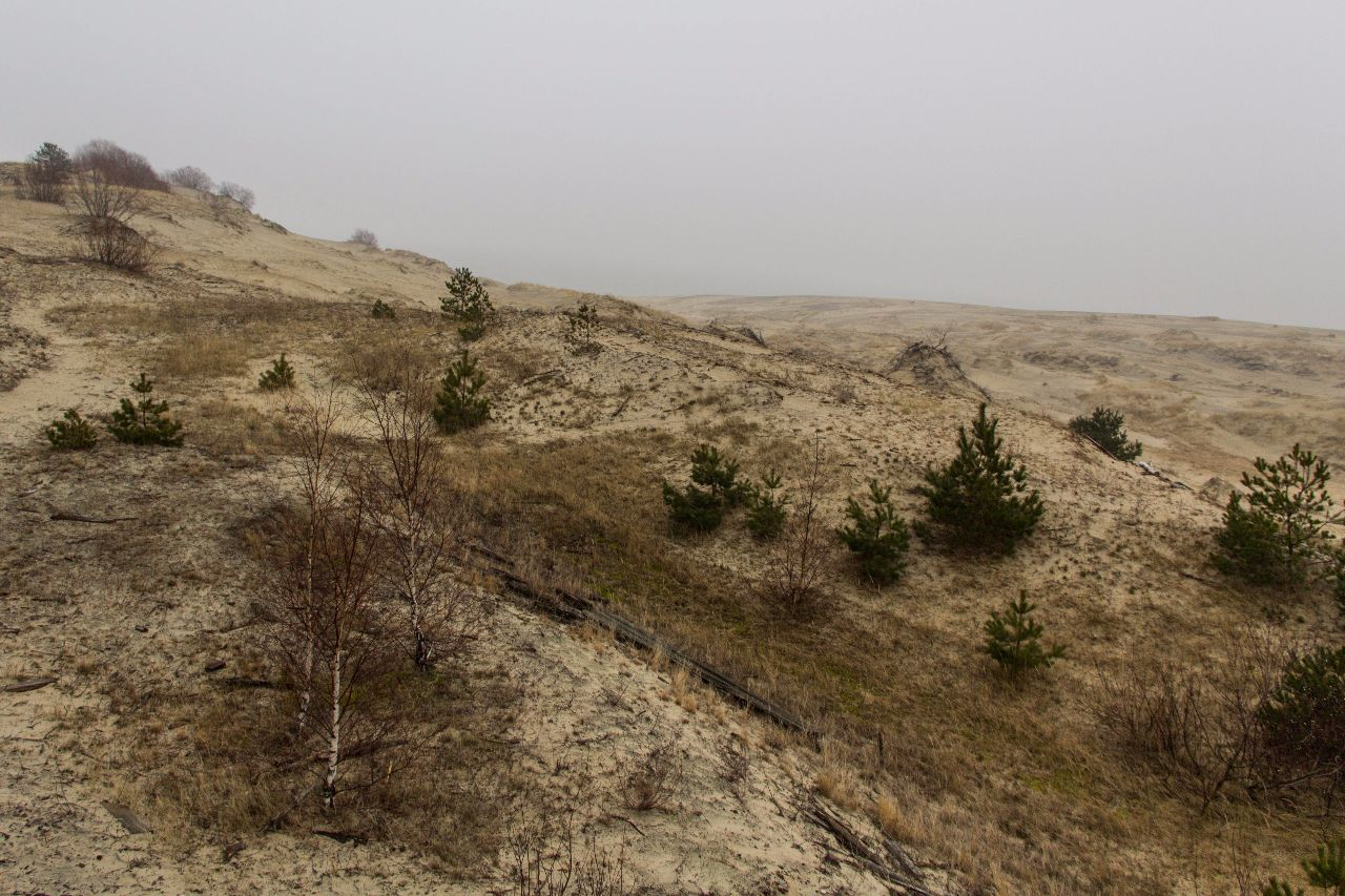 Куршская коса. Дюны Куршская Коса Национальный Парк, Россия