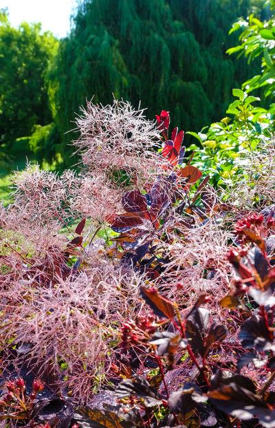 Как называется это безумное растение, я не знаю, но мне кажется, что настоящая, непотдельная радость должна выглядеть именно так.