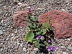 Удивили обнаруженные в камнях цветы