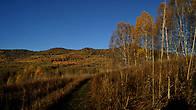 Золото Алтайской осени
