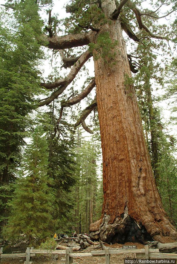 Роща гигантов Йосемити Национальный Парк, CША