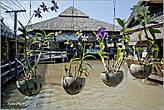 Уютно висящие цветы в горшках из кокоса... *