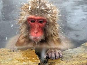 Кто сказал что обезьяны не могут думать о вечном?