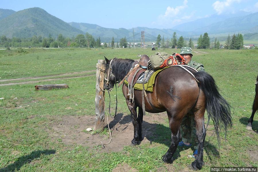 Валерий снаряжает коня Ирины. Тюнгур, Россия