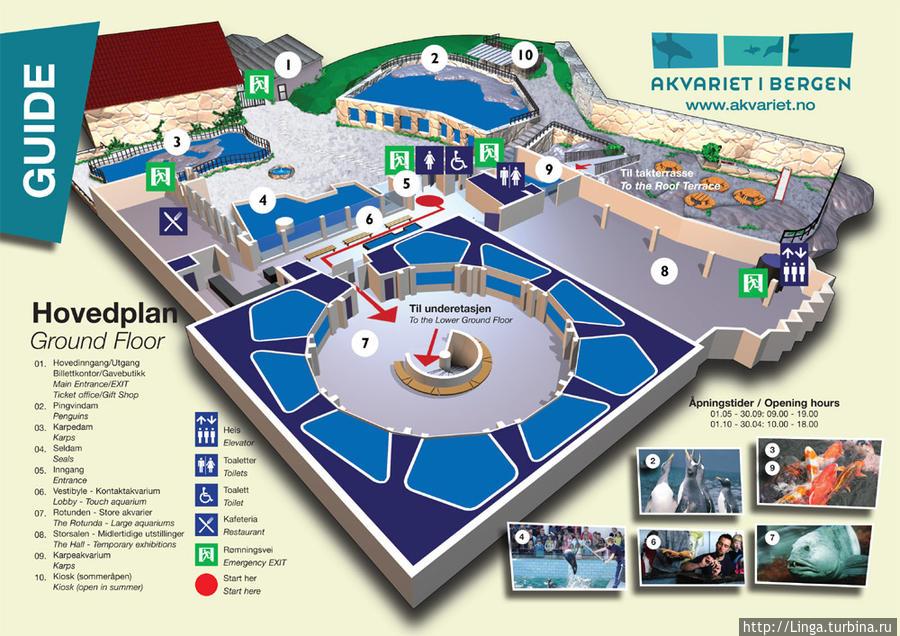 Схема первого яруса  и прилегающей территории с сайта аквариума
