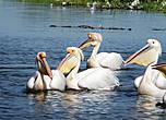 Пеликаний остров