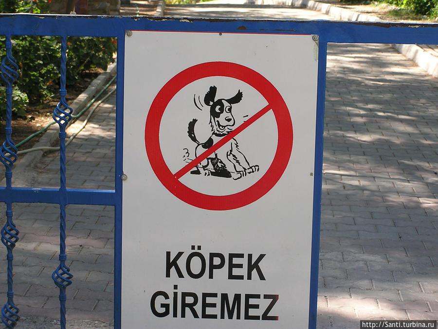 На территорию пляжа и прибрежного парка с собаками нельзя...