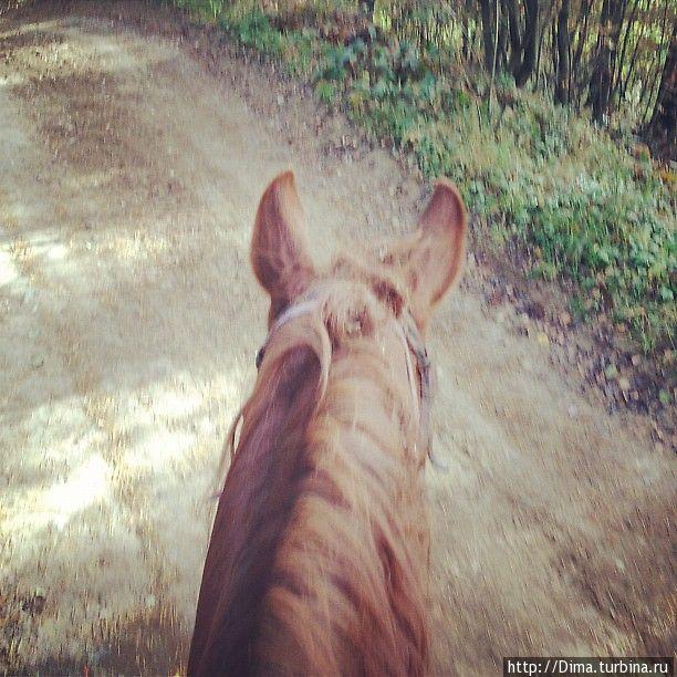 Вид с лошади. Нужно следить за тем, чтобы кони не останавливались на обочинах, чтобы поесть траву. Они это любят. :)