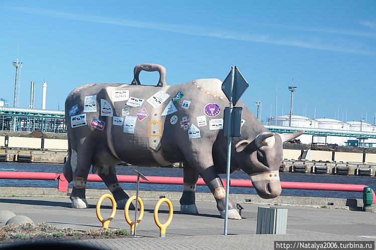 Корова-путешественница