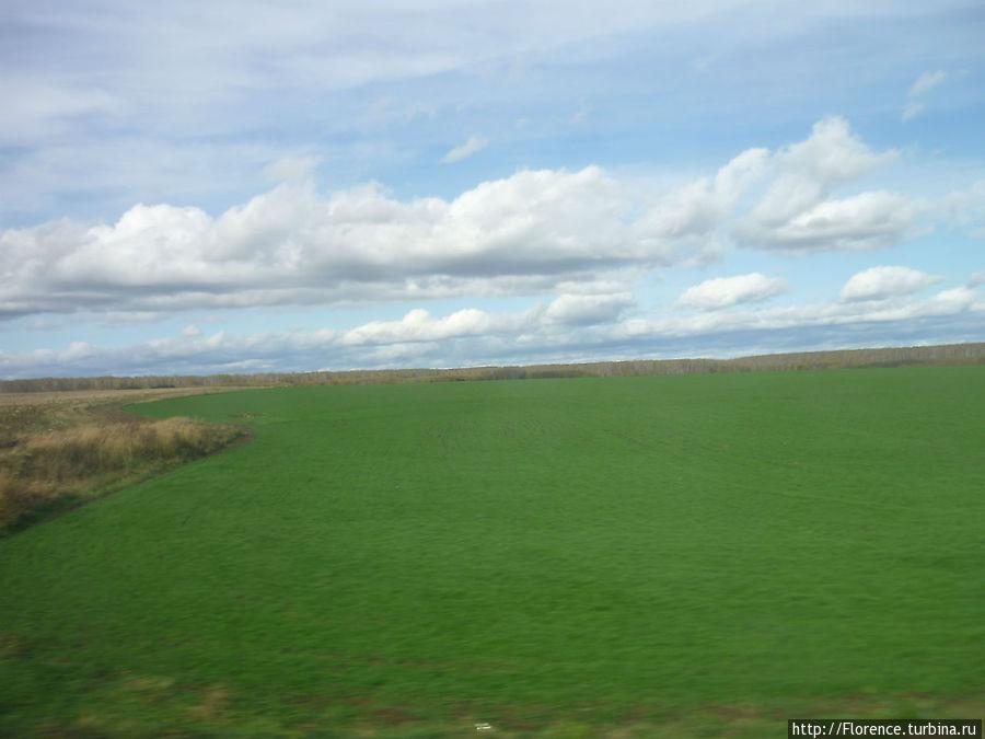 Эта невероятная зелень — подтверждение того, что мы едем на юг