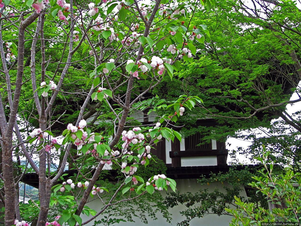 Shin-Yakushi-ji Нара, Япония