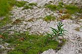 растения, нарушающие административный протокол...