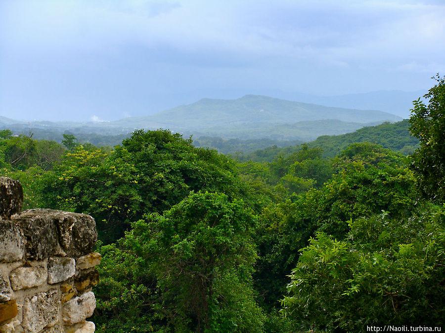 Вид на джунгли