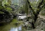 Речка Буритака пересекает джунгли и приводит в Затерянный город