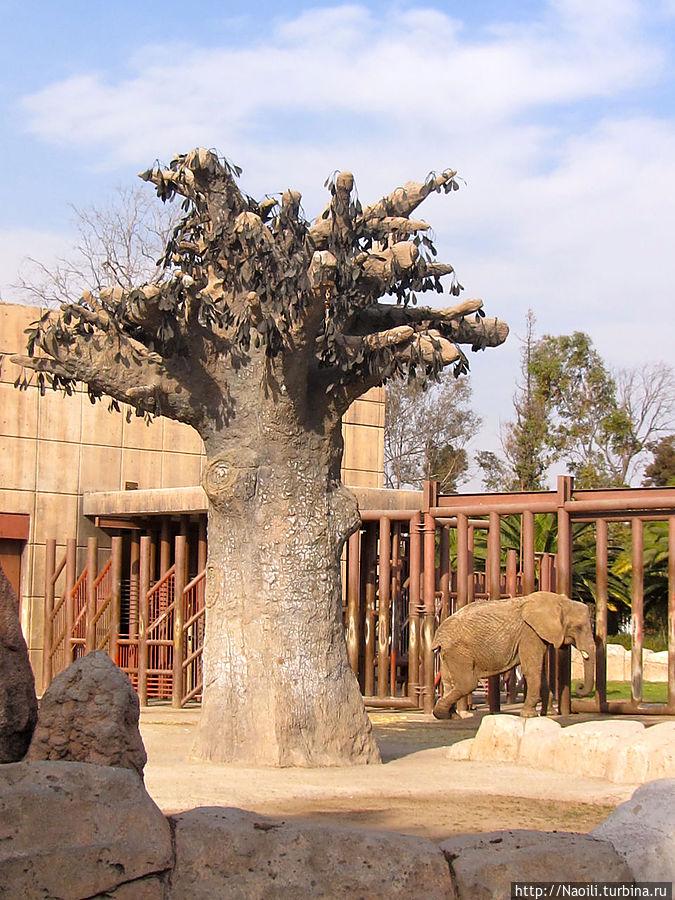 Большое дерево, явно не местного происхождения