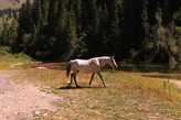 Белый конь.