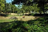 Как в природе — жирафы соседствуют со слоном
