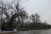 Грачиные гнёзда на деревьях есть и в настоящее время