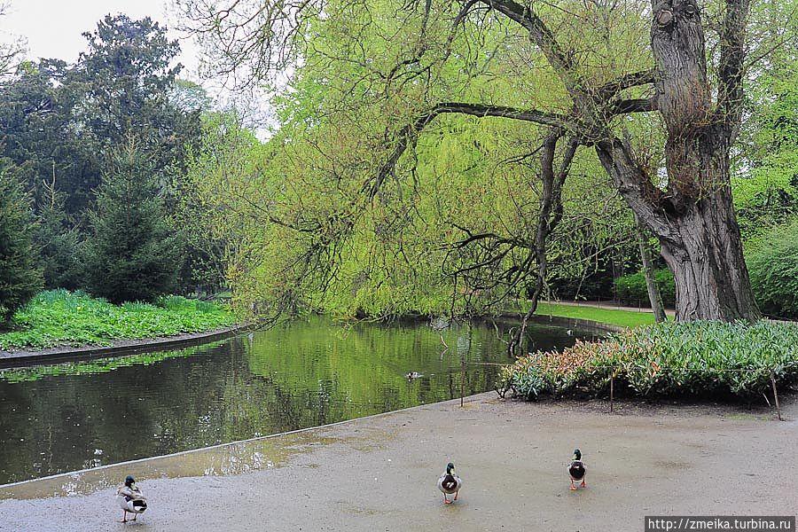 Вдоль прудов растёт множество деревьев. Некоторые, что постарше приобрели причудливые формы.