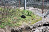 Кот, который гулял через границу сам по себе.
