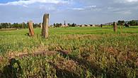 Старое поле стел