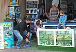 Досуг отдыхающих с рыбками Carra-Rufa.