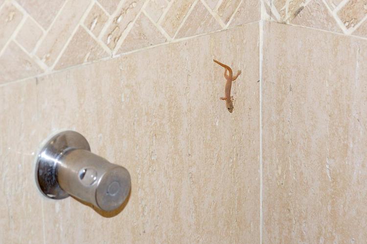 Звероящер в ванной :)
