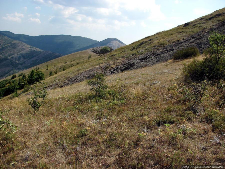 Моя тропа Зеленогорье, Россия